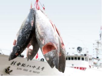 大洋世家:中国金枪鱼大玩家