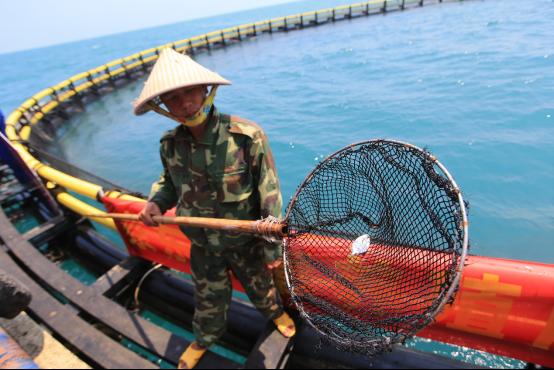 京东出台最严金鲳鱼检测标准 管控指标超140项
