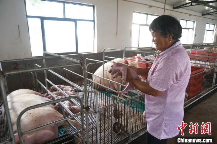 猪肉价格连续13周下降 今